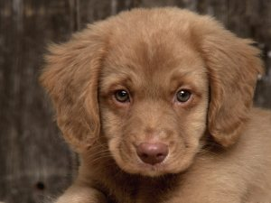 Sad-Puppy-puppies-9726248-1600-1200